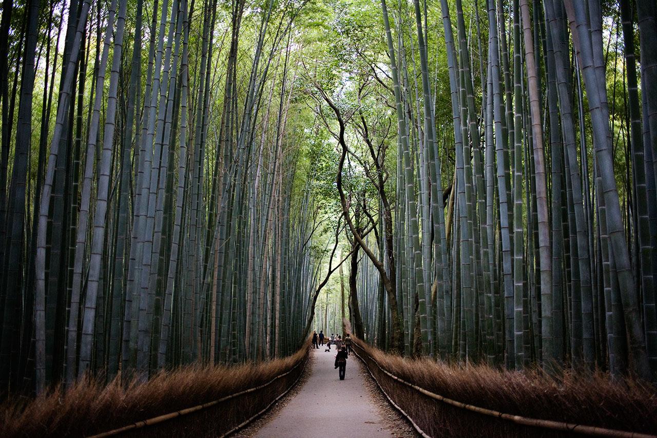 Arashiyama-Bamboo-Forest